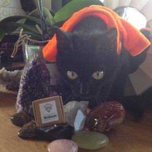 Gatos y Piedras
