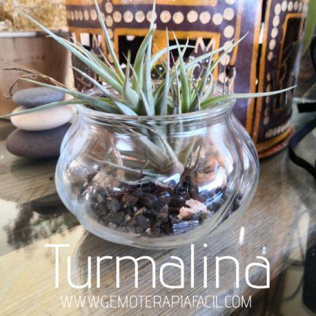 terrario turmalina negra