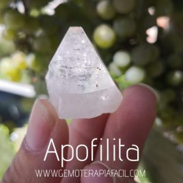 apofilita natural gemoterapia facil9