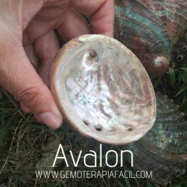 concha abalon gemoterapiafacil