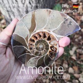 Amonite – PRE-MUNICH 2021