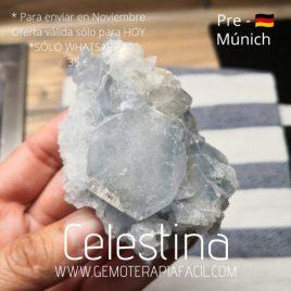 Celestina 1- PRE-MUNICH 2021